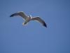 Чайките - 14