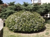 Растенията на Каляри - 2