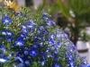 Растенията на Каляри - 3