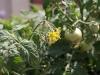 Растенията на Каляри - 4