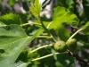 Растенията на Каляри - 5