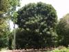 Ботаническата градина - 4