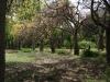 Ботаническата градина - 7