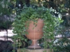 Растения - 1