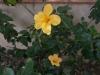 Растения - 2