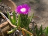 Растения - 4