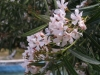 Растения - 7