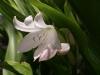 Растения - 5