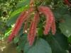 Растения - 6