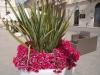 Цветята - 5