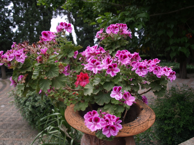 Флора и фауна - 1