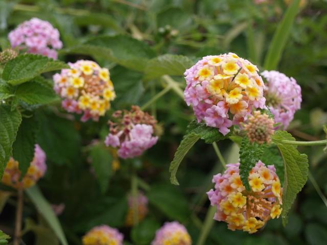 Флора и фауна - 4