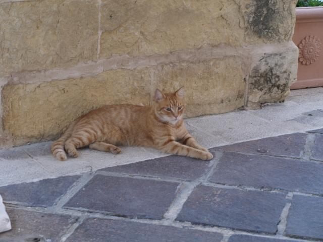Котките - 1