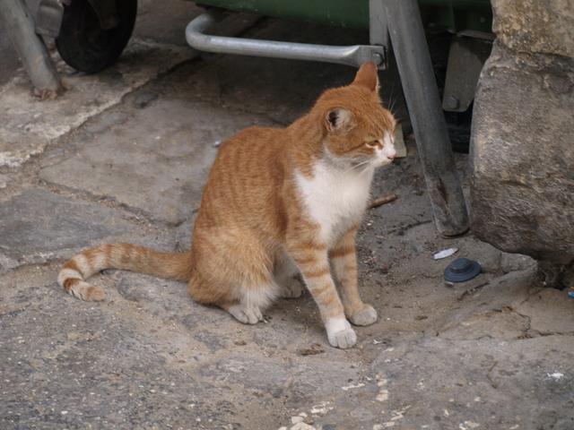 Котките - 3