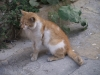 Котките - 4