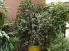 Градината - 10