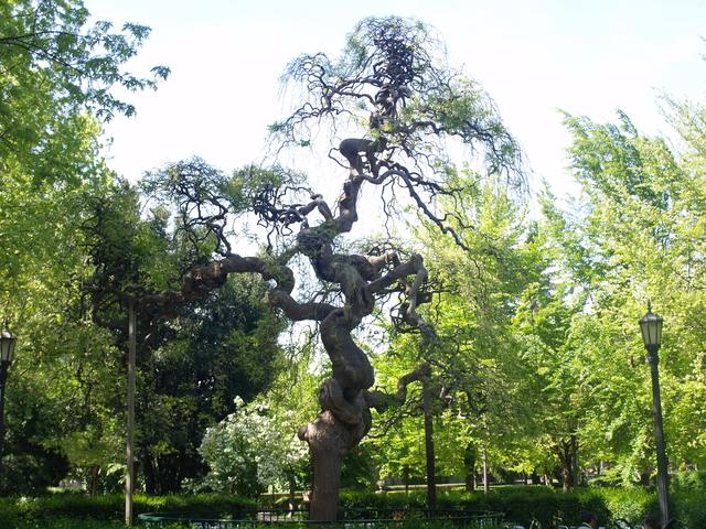 Паркът - 1