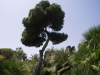 Trees - 1
