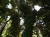 Trees - 3