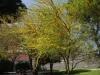 Trees - 9