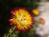 Flowers - 10