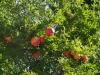 Градините - 5