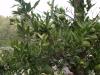 Градините - 9