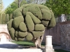 Дървета - 5