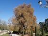 Дървета - 3