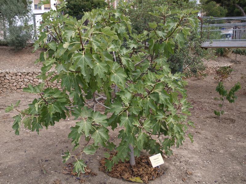 Растения - 13