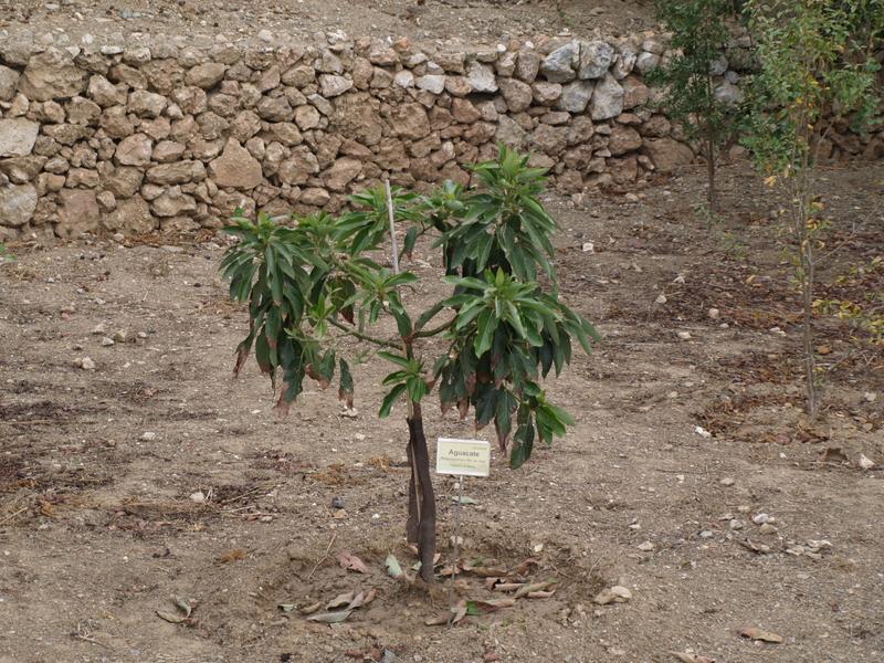 Растения - 14