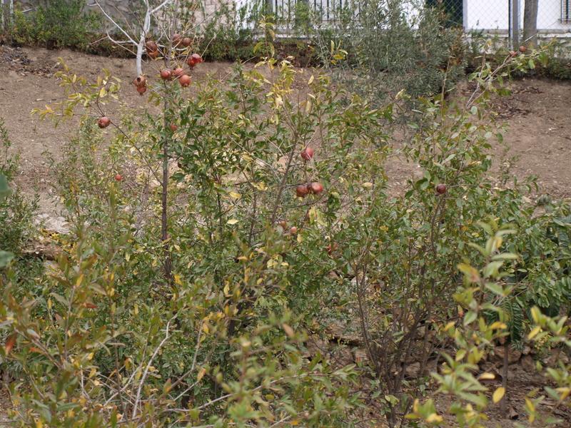 Растения - 15