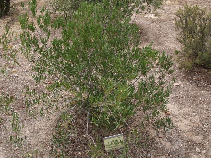 Растения - 18