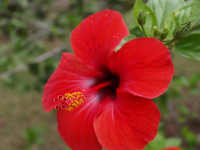 Цветя - 5