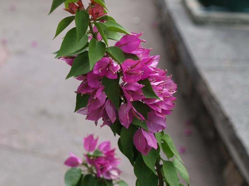Цветя - 6