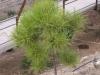 Растения - 8