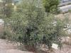 Растения - 11