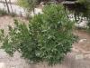Растения - 12