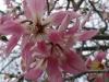 Цветя - 1