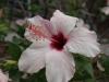Цветя - 3