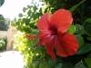 Градините - 11