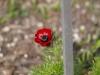 Градината - 14