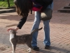 Мачка парк - 7