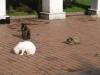 Мачка парк - 2