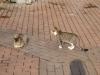 Мачка парк - 5
