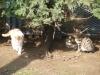 Мачка парк - 12