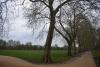 Дърветата - 1