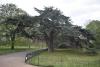 Дърветата - 2
