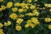 Цветята - 10