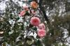Цветята - 13